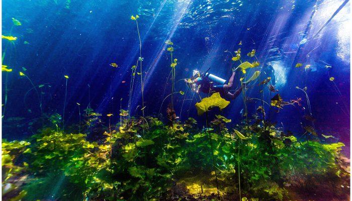 Cenote Underwater Photography